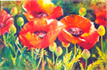 Poppies 2 by Marie Natale